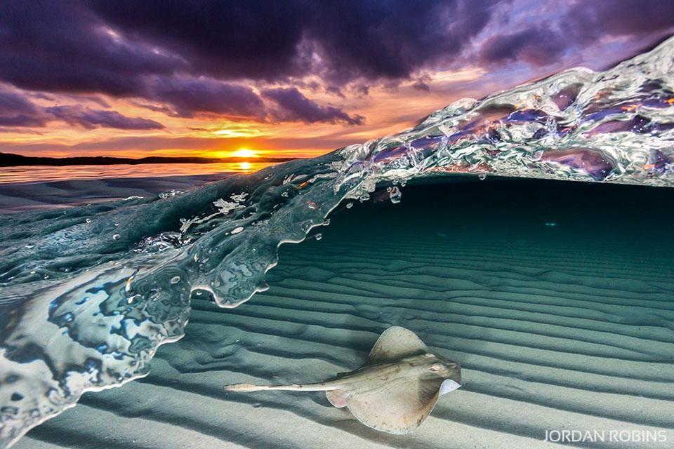 ocean life jordan robins photography