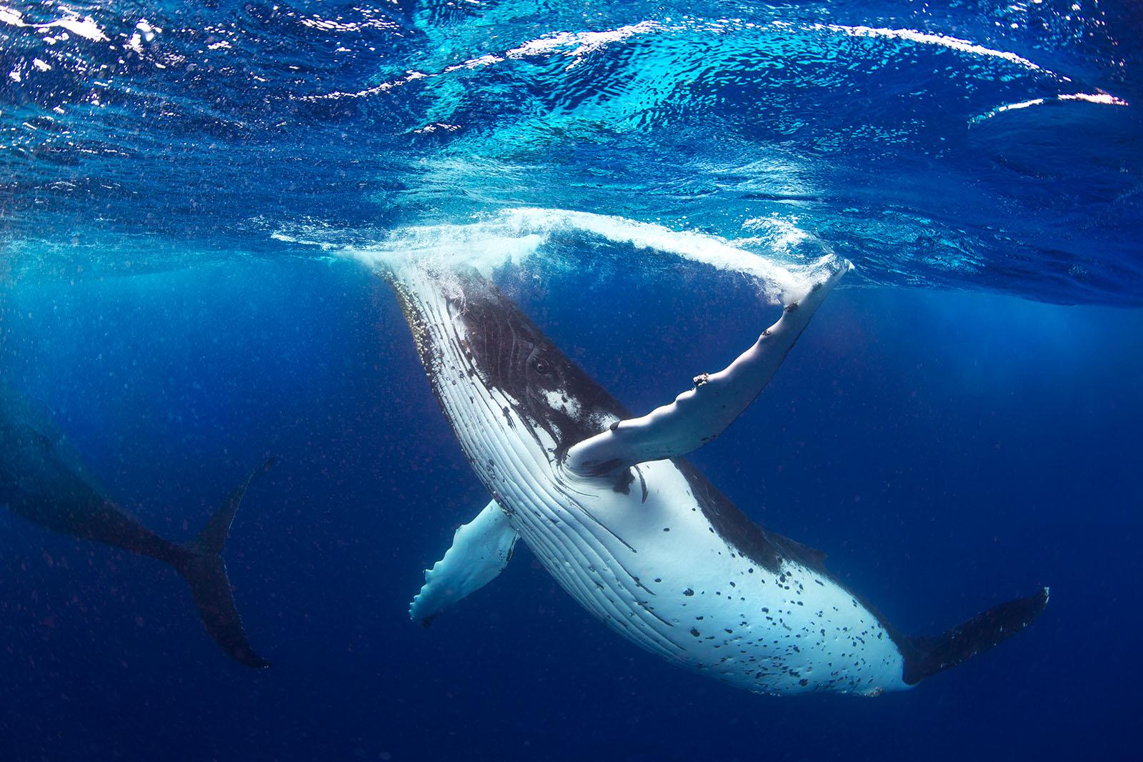 Whale In Ocean